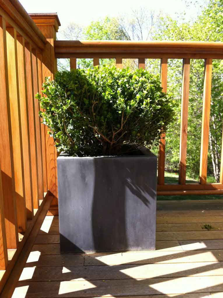 mast-and-falls-boxwood